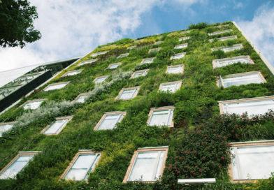 Le facciate verdi possono raffreddare le città del futuro?