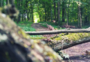Come la perdita delle foreste porta alla diffusione di zoonosi come il Covid-19